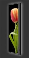 Design Leuchtbild vertikal 519