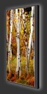Design Leuchtbild XL vertikal 540
