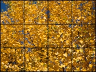 Deckenmotivplatten 12er